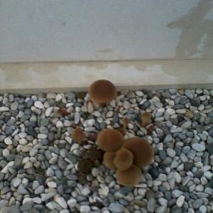 funghi 13 novembre 2012