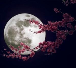 luna fiori